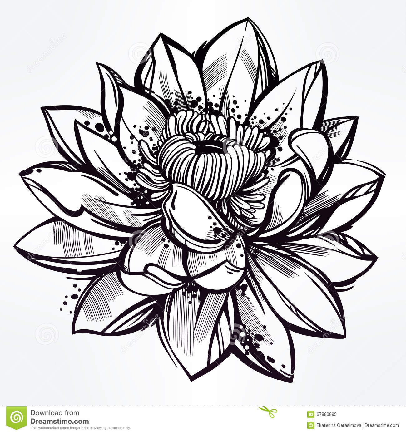 Line Drawing Of Flowers : Sketch of lily lotus flower in linear style stock vector