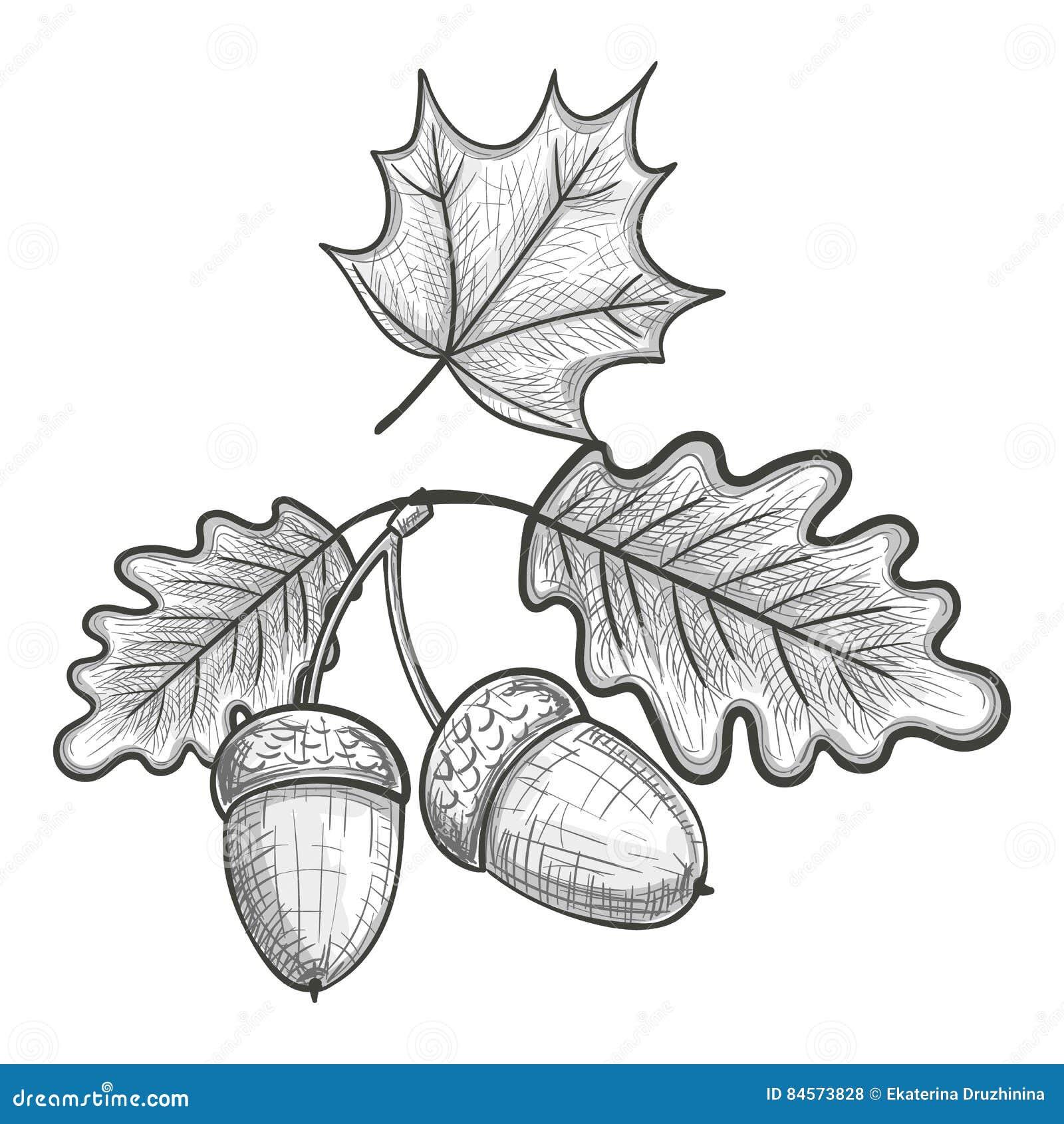how to draw an oak leaf
