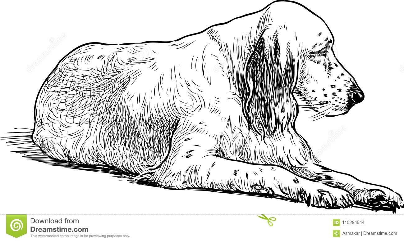 Sketch Of An Old Sad Spaniel Stock Vector - Illustration of
