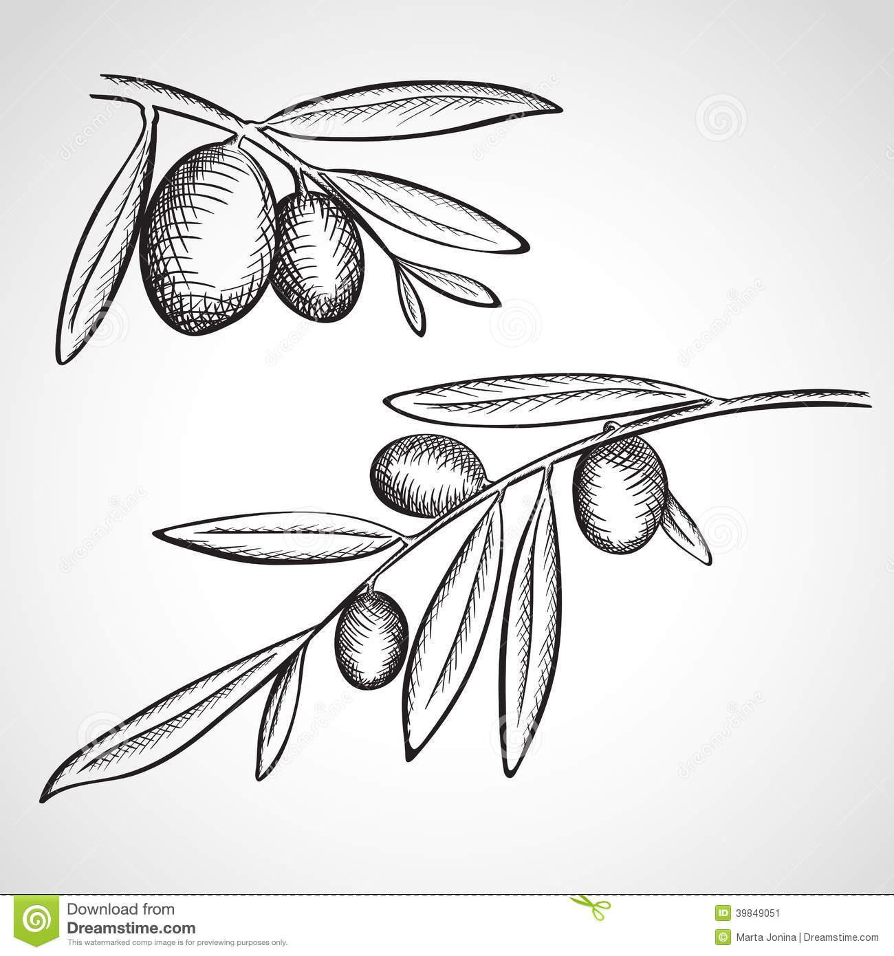 Sketch Olive Tree Branches Stock Illustration ...
