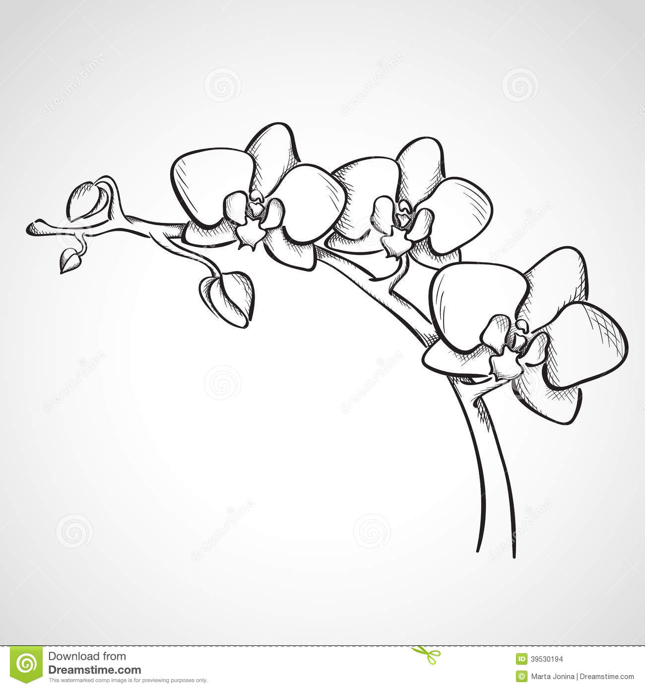 Sketch Orchid Branch Stock Illustration - Image: 39530194