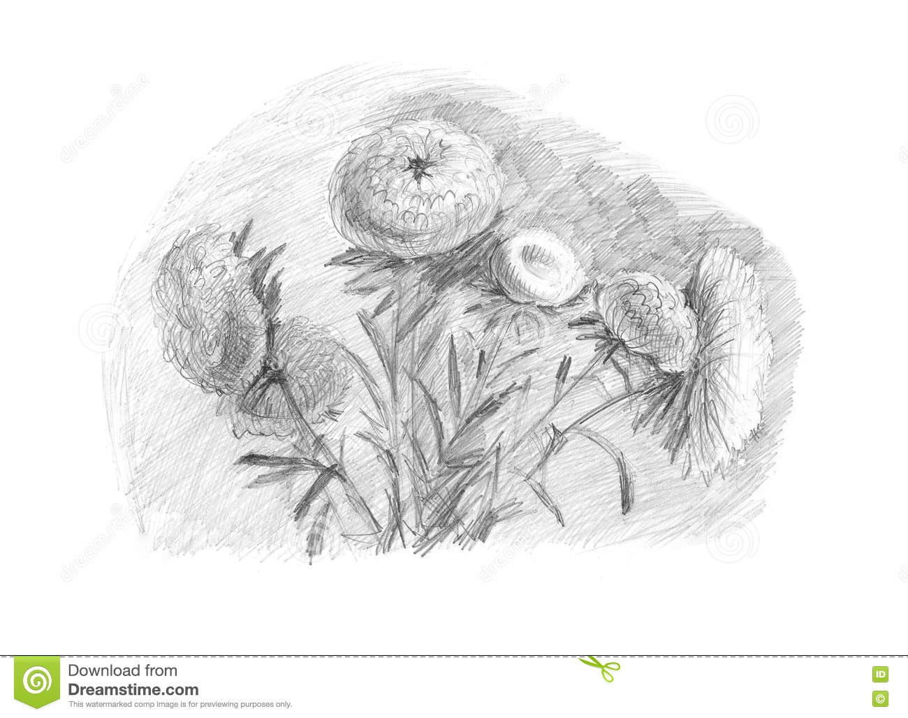 Sketch A Pencil On White Paper Stock Illustration Illustration Of