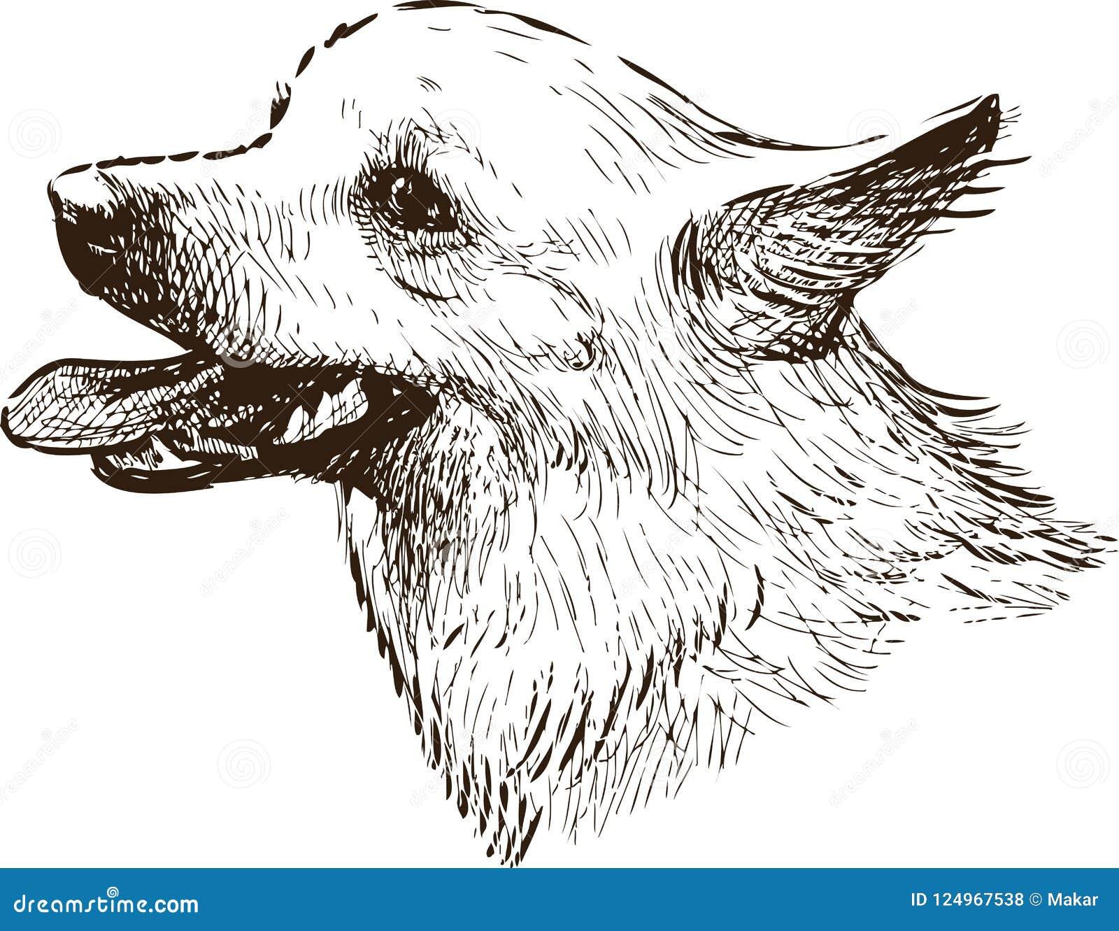 Sketch portrait of a lap dog
