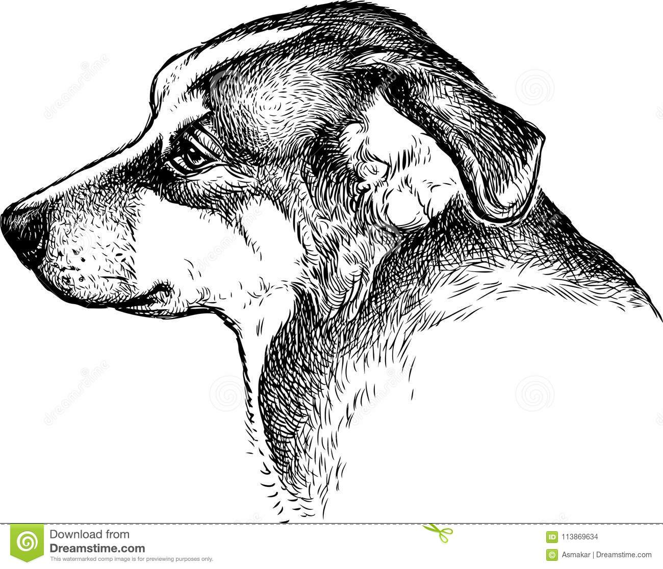 Sketch Portrait Of A Sad Dog Stock Vector - Illustration of animal