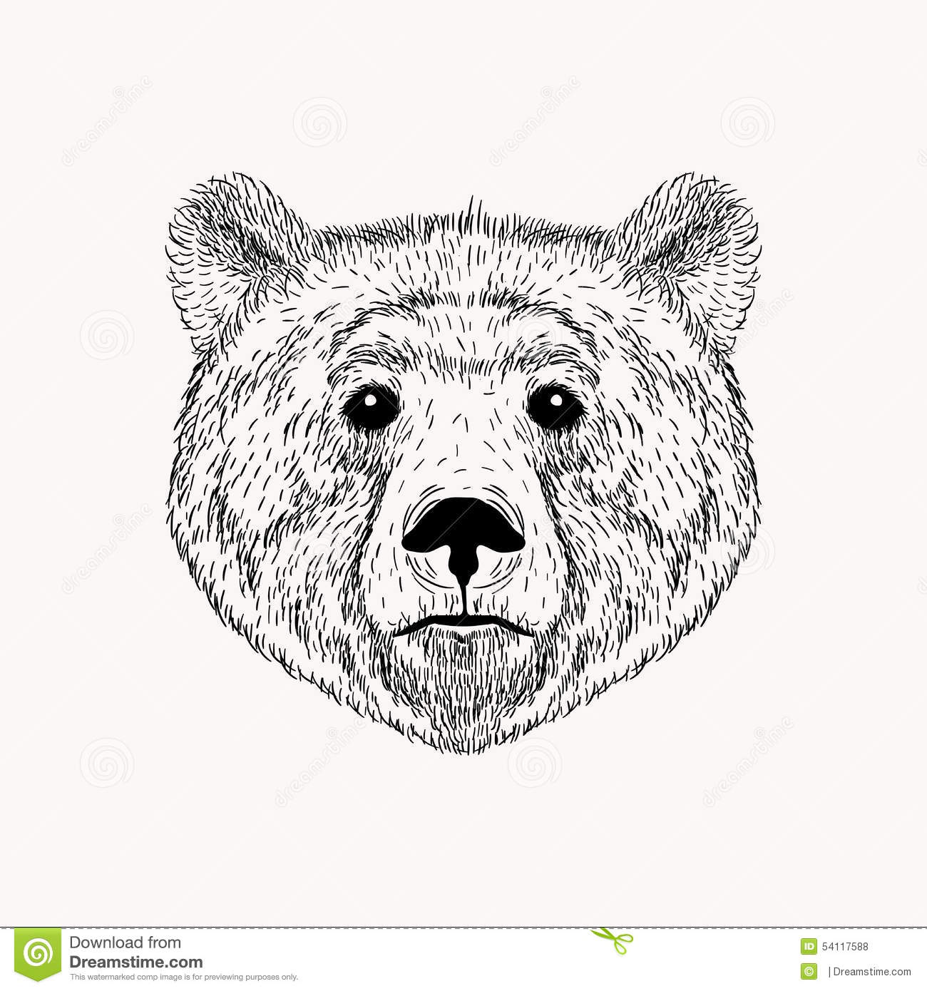 Sketch Realistic Face Bear. Hand Drawn Stock Illustration ... Bear Face Drawing