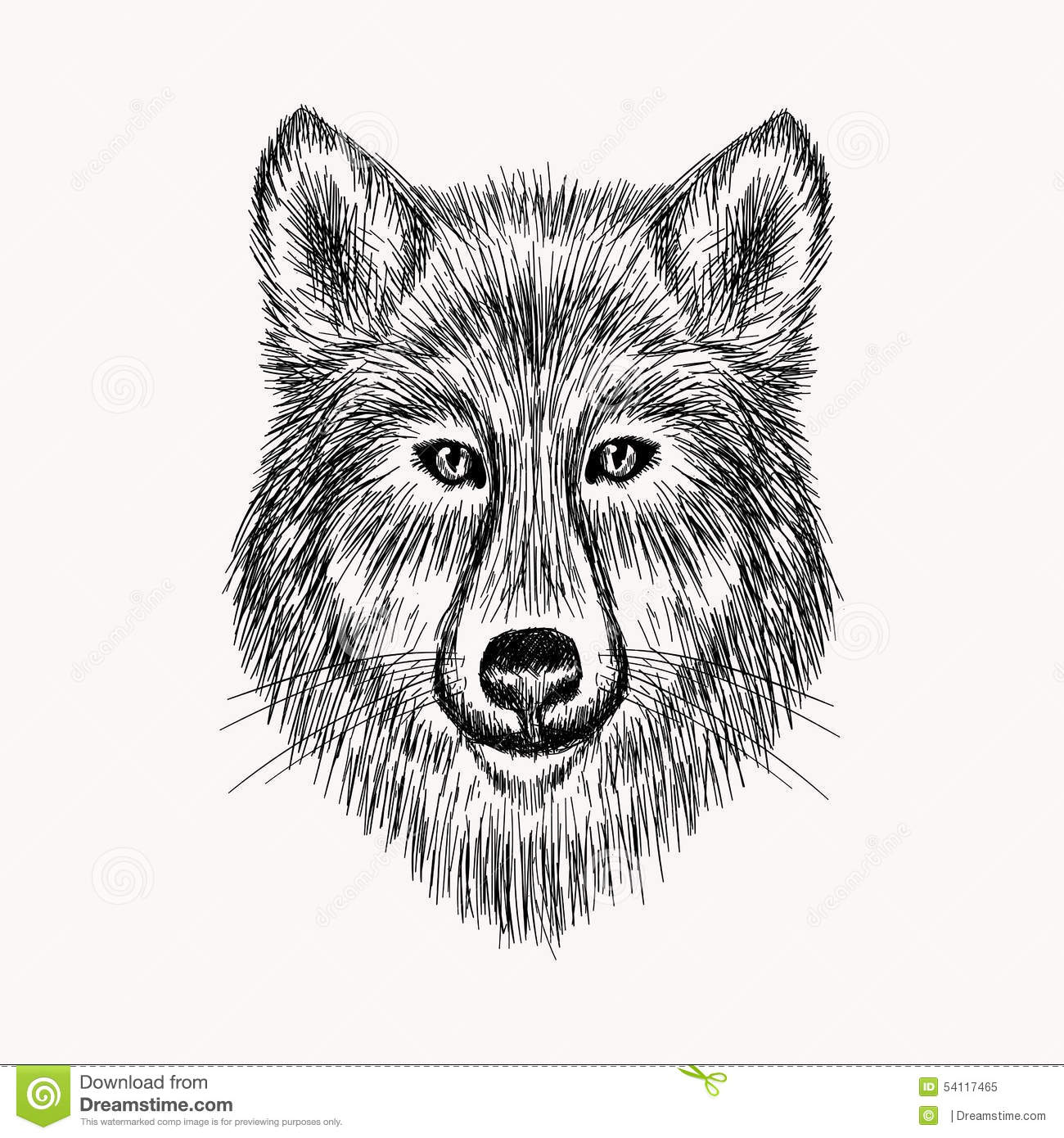 Sketch Realistic Face Wolf Hand Drawn Illustration Stock
