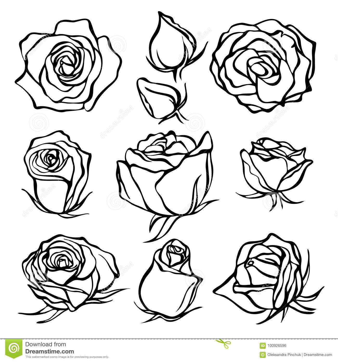 Sketch rose flower set pencil sketch flowers with leaves on stem