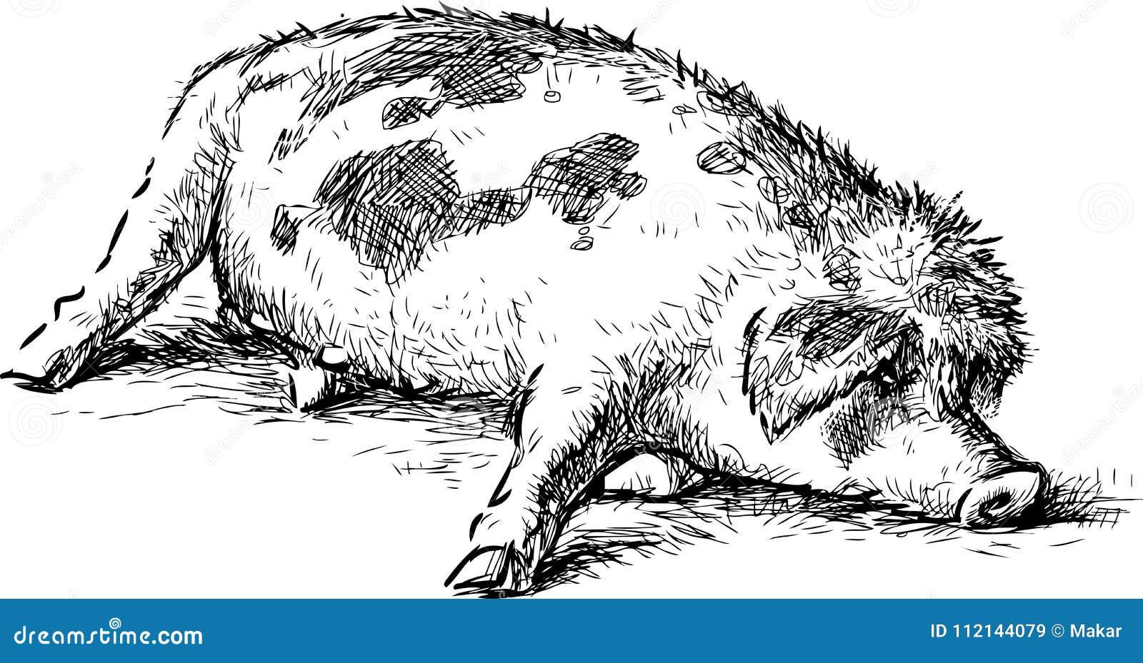 Sketch of sleeping lazy cartoon pig