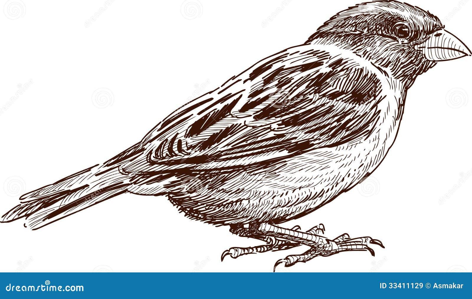 Pencil Sketch Drawing Of Birds  ClipartXtras