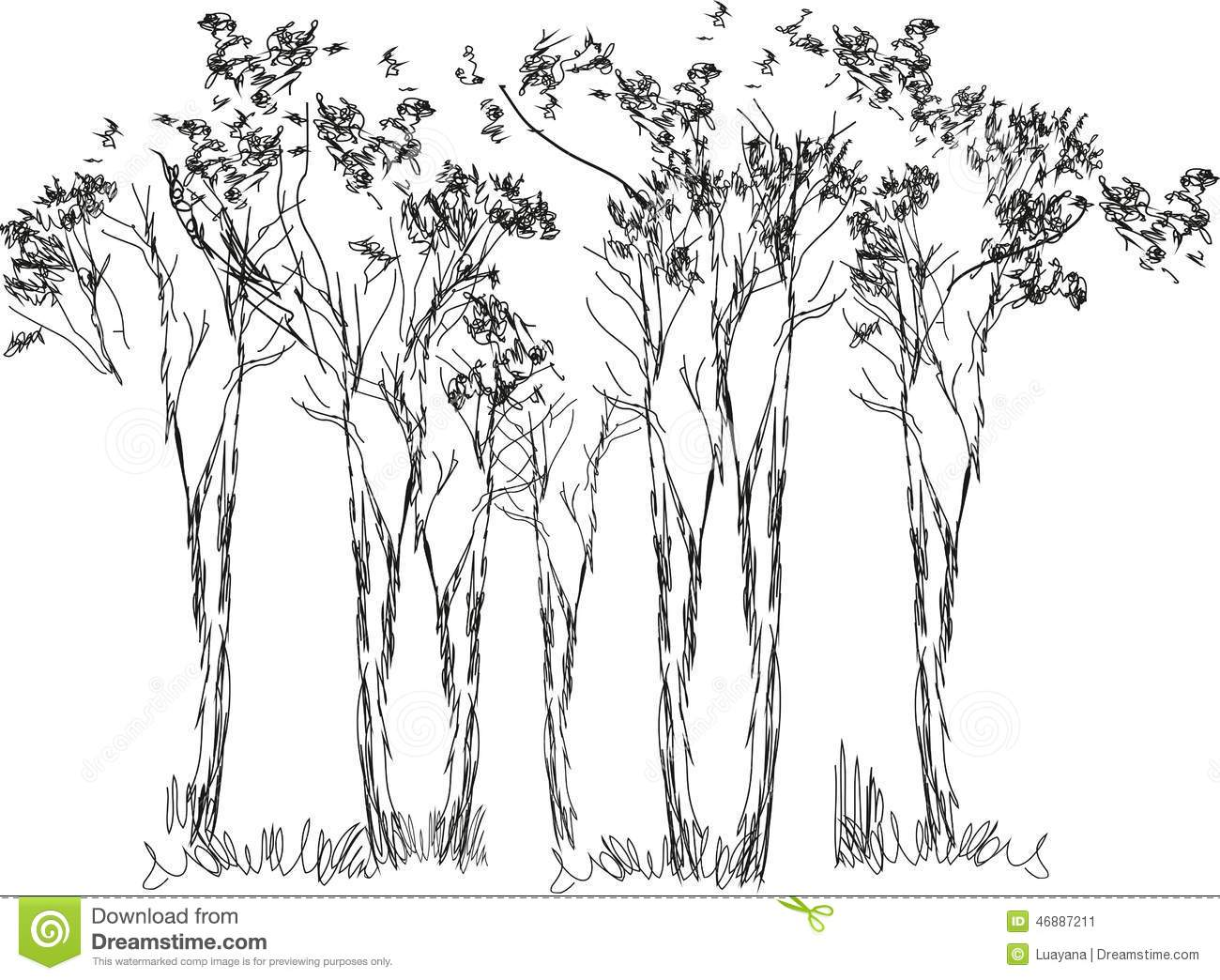 Sketch Of Trees Stock Vector Image 46887211