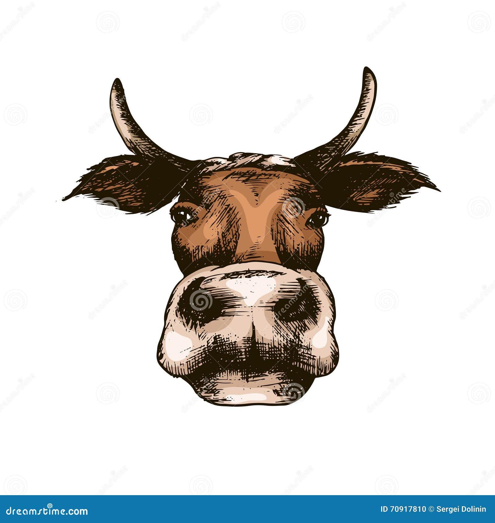 cow head sketch stock vector image 69781261