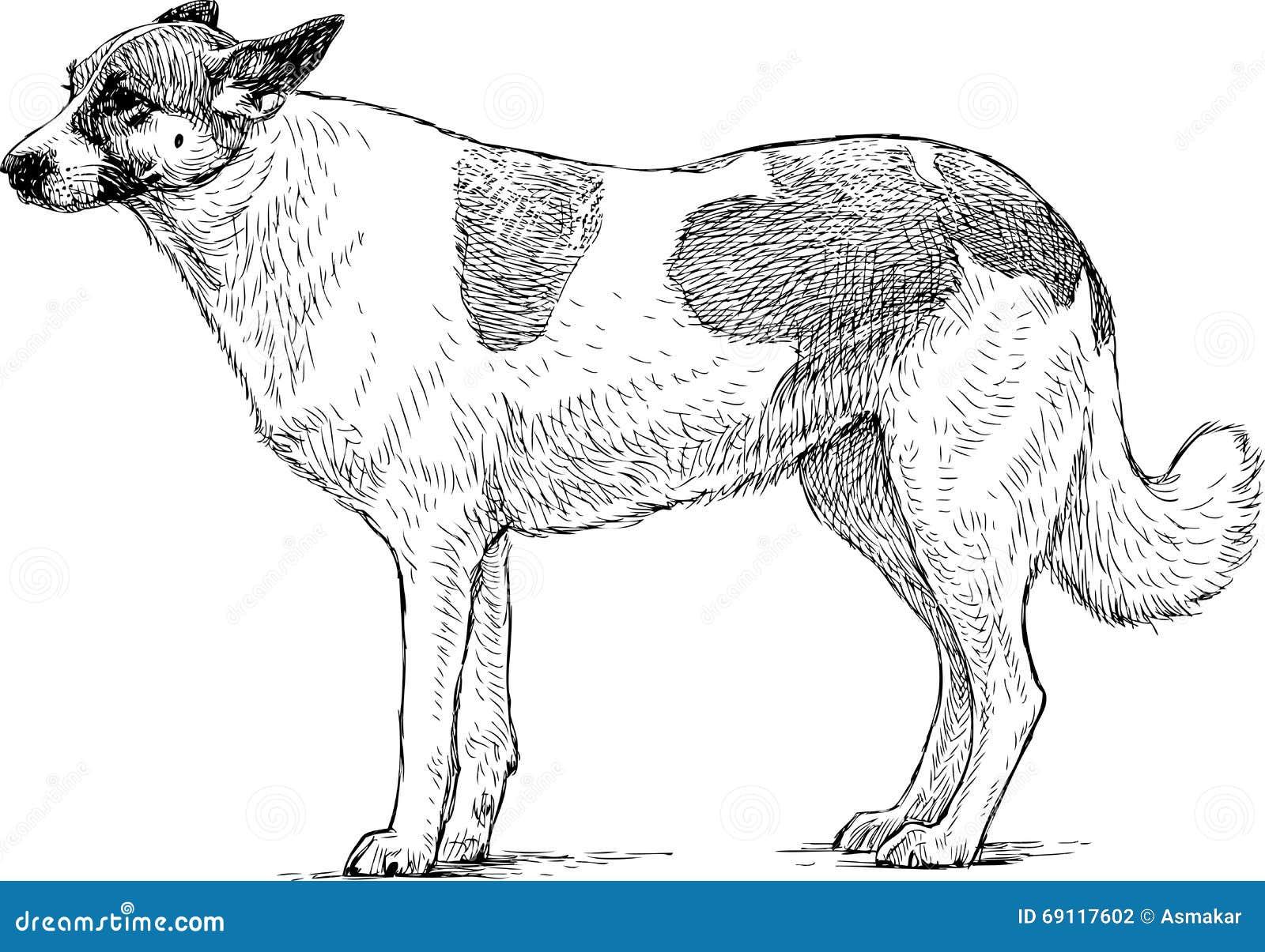 sketch of a watchdog stock vector