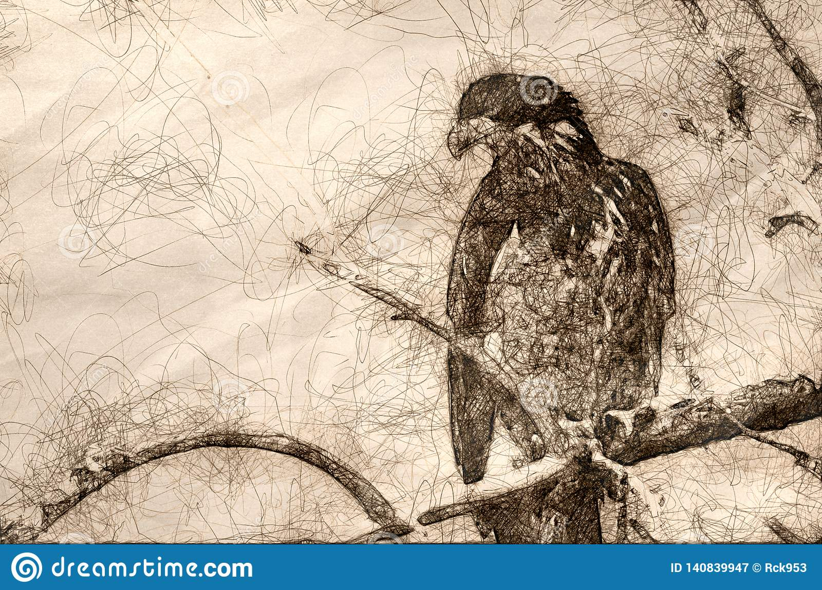 Sketch of a young bald eagle surveying the area while perched high in a barren tree
