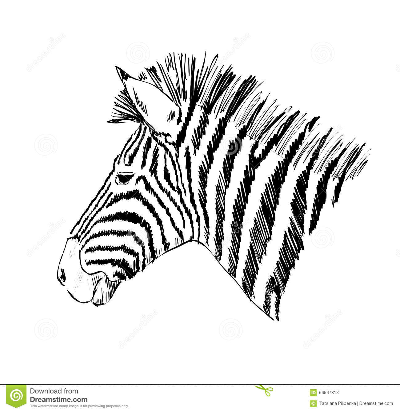 Sketch Of A Zebra Stock Vector Image: 66567813