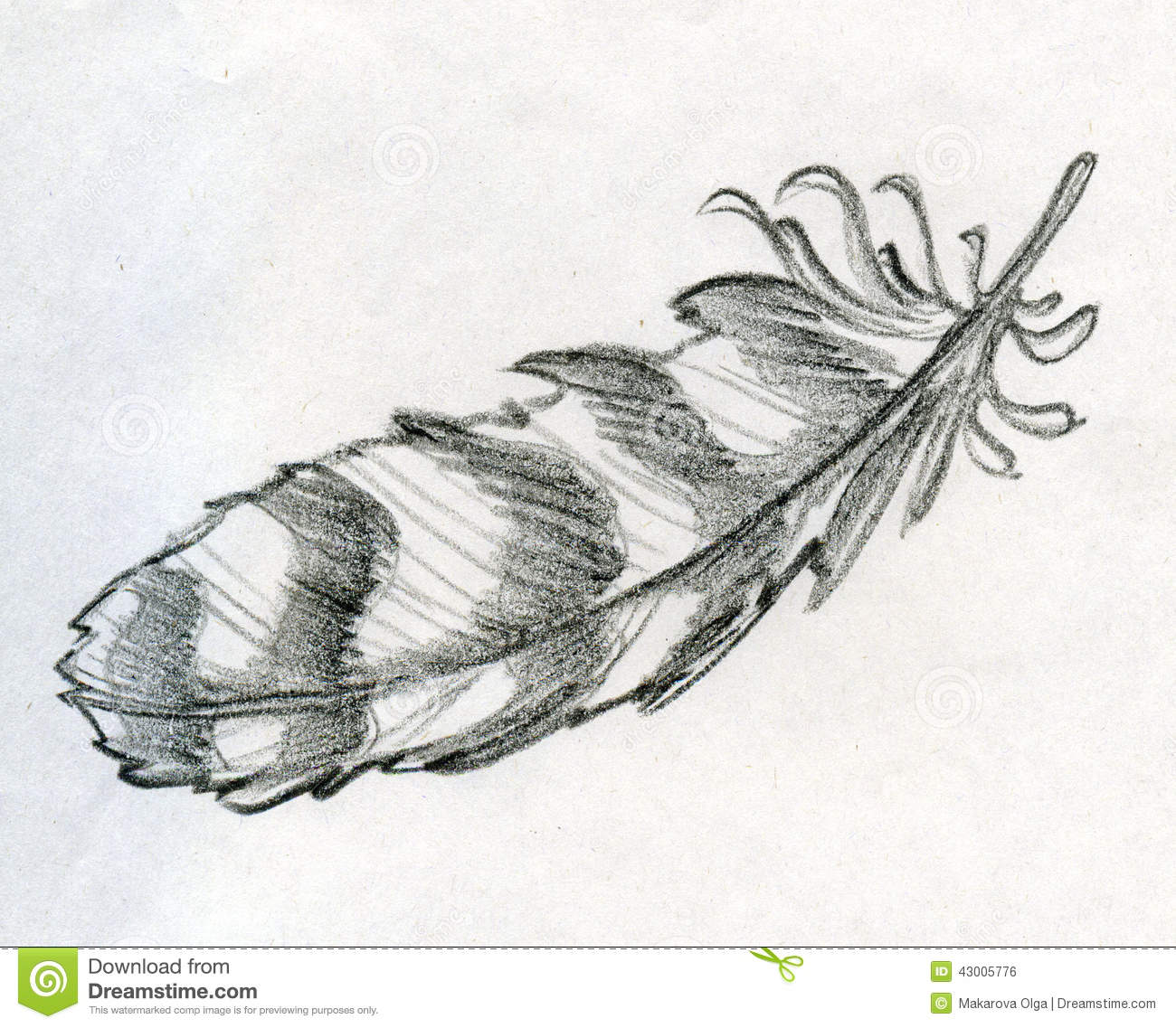 Hand drawn pencil sketch of a striped eagle feather. Vintage writing ...