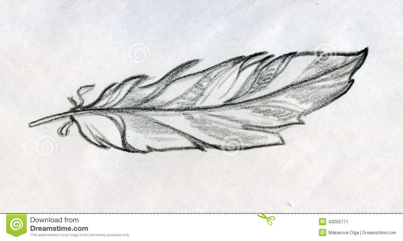 Sketched Feather Stock Illustration Image 43005771