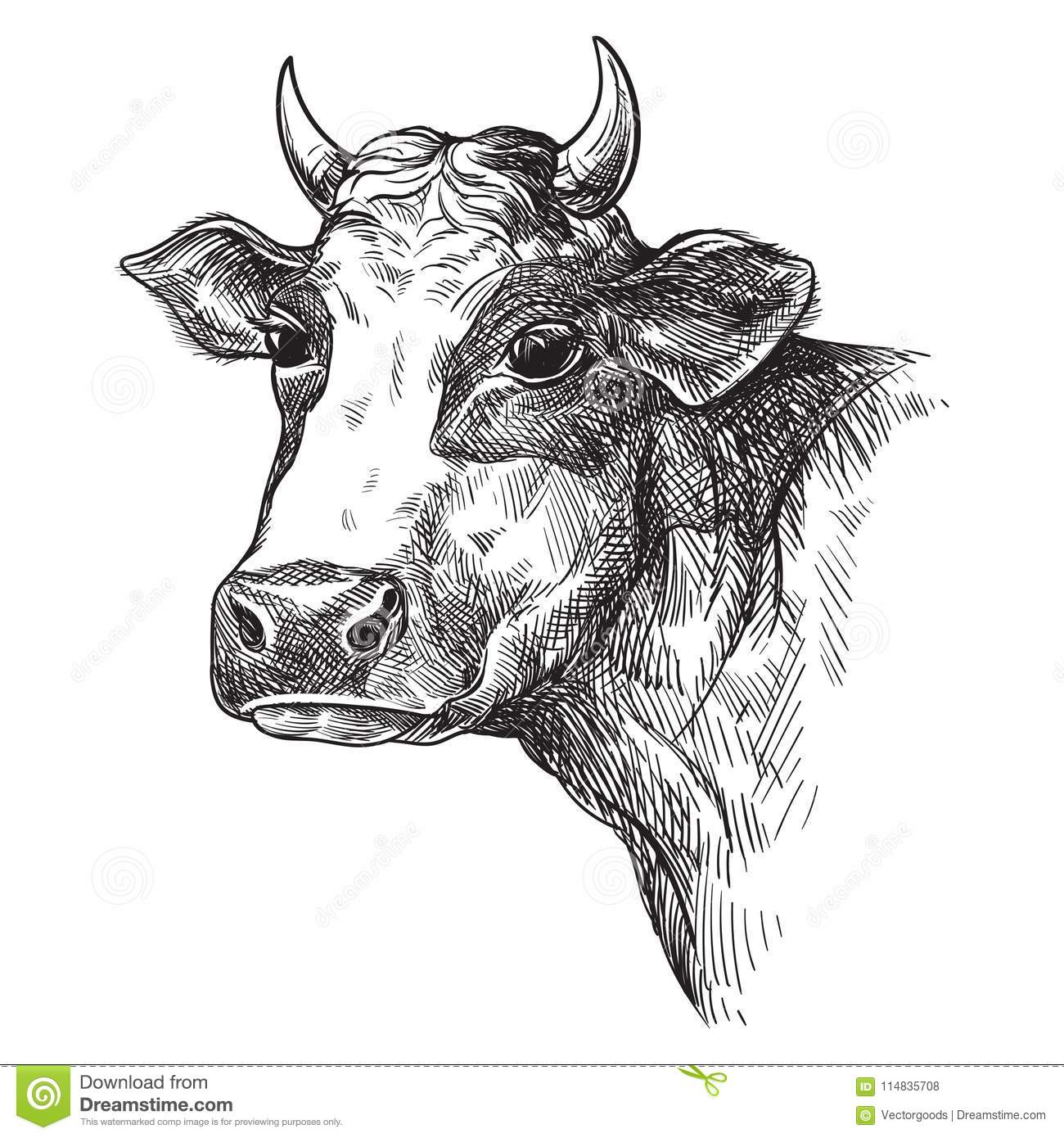 Cow Face Easy To Draw - Cattle Face Drawing