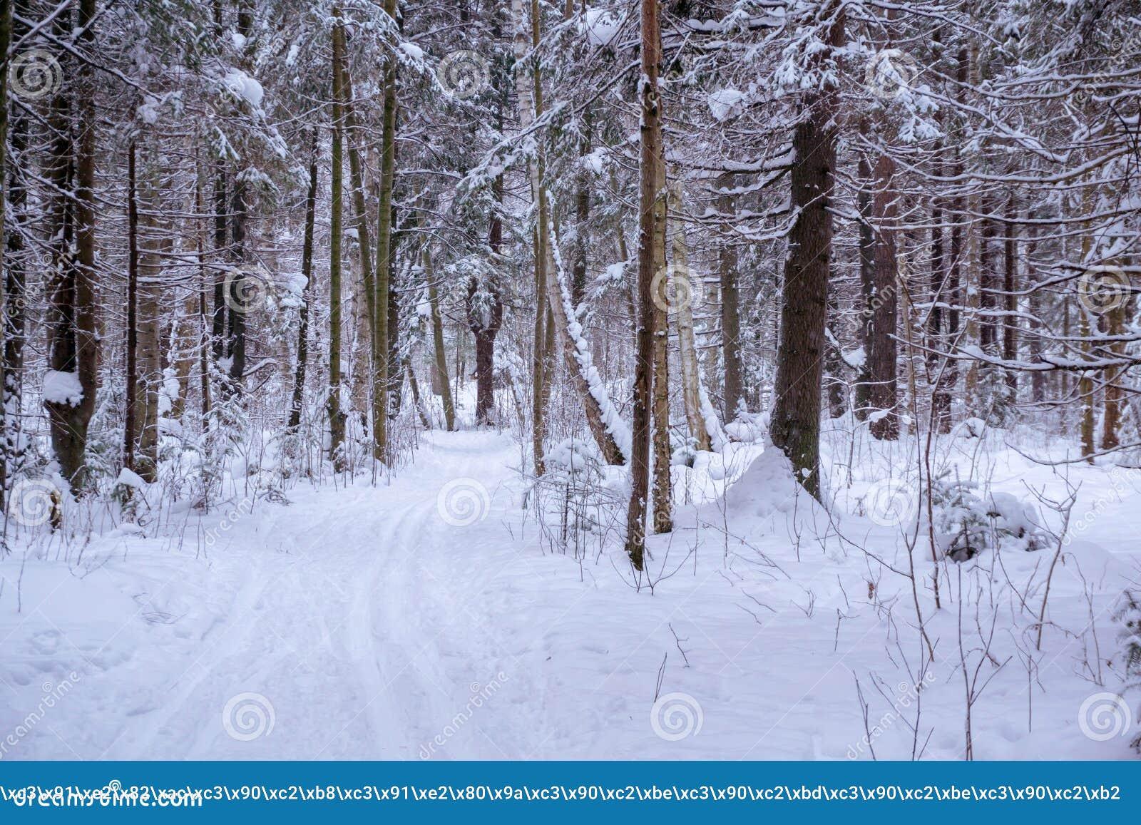 Ski in het de winterbos dat in werking wordt gesteld