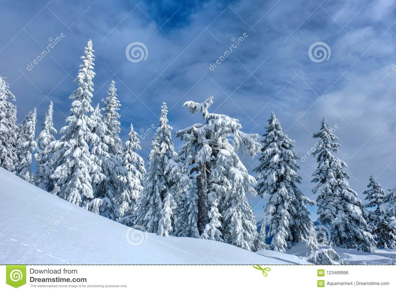 winter landscape with trees under fresh snow. stock photo - image of