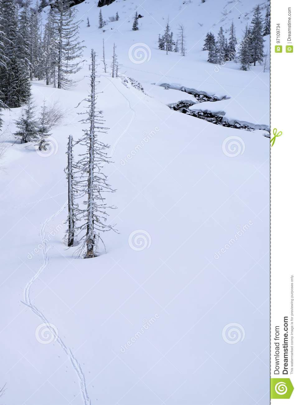 Ski tracks past tree