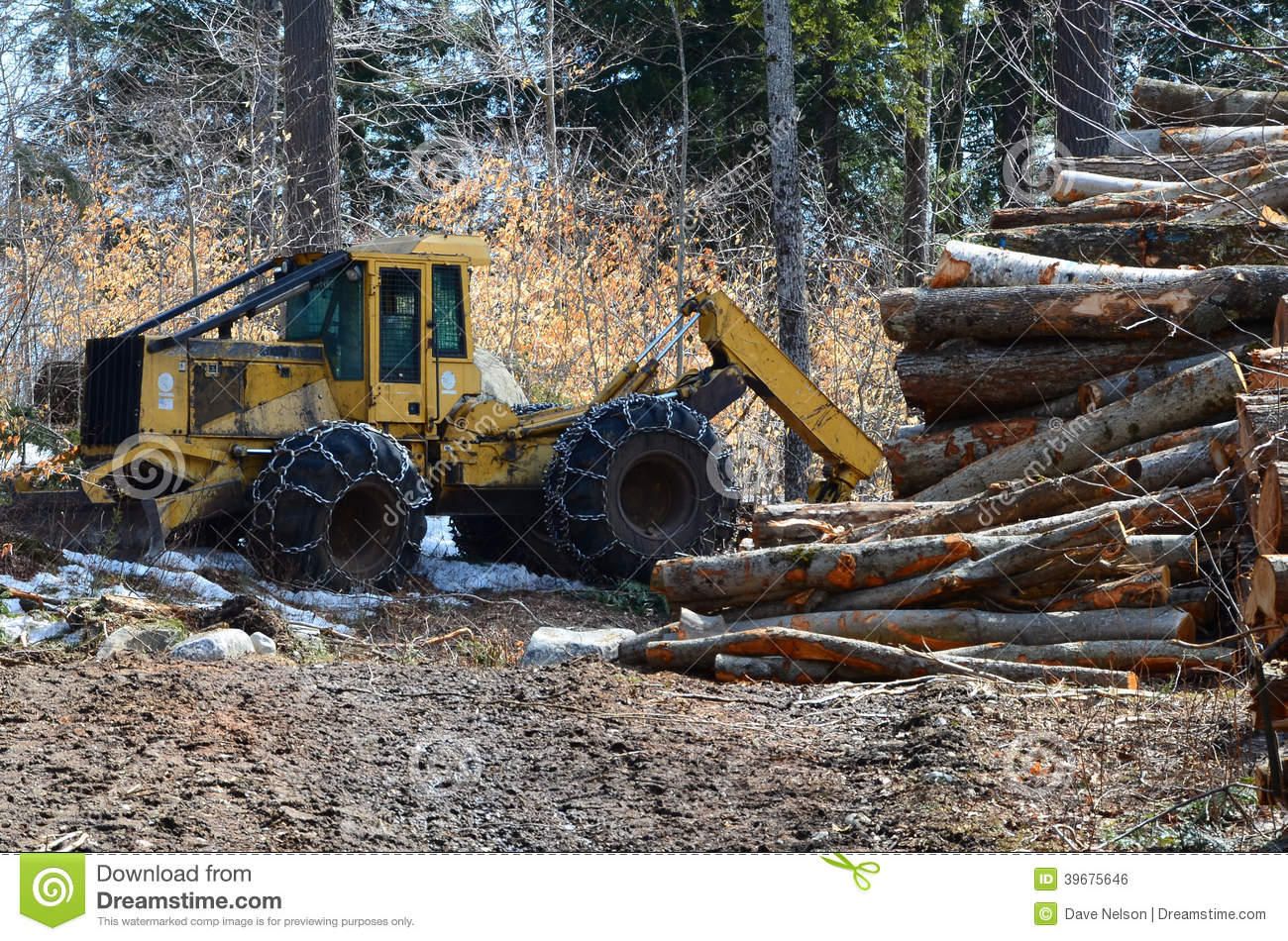 Skidder e logs do log