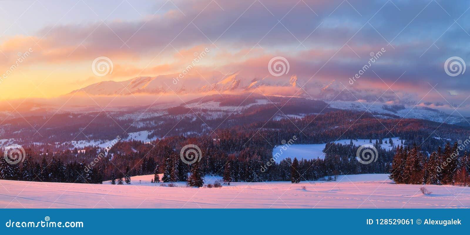 Skifahrenbereich nahe Amden Baumfeld und -schnee