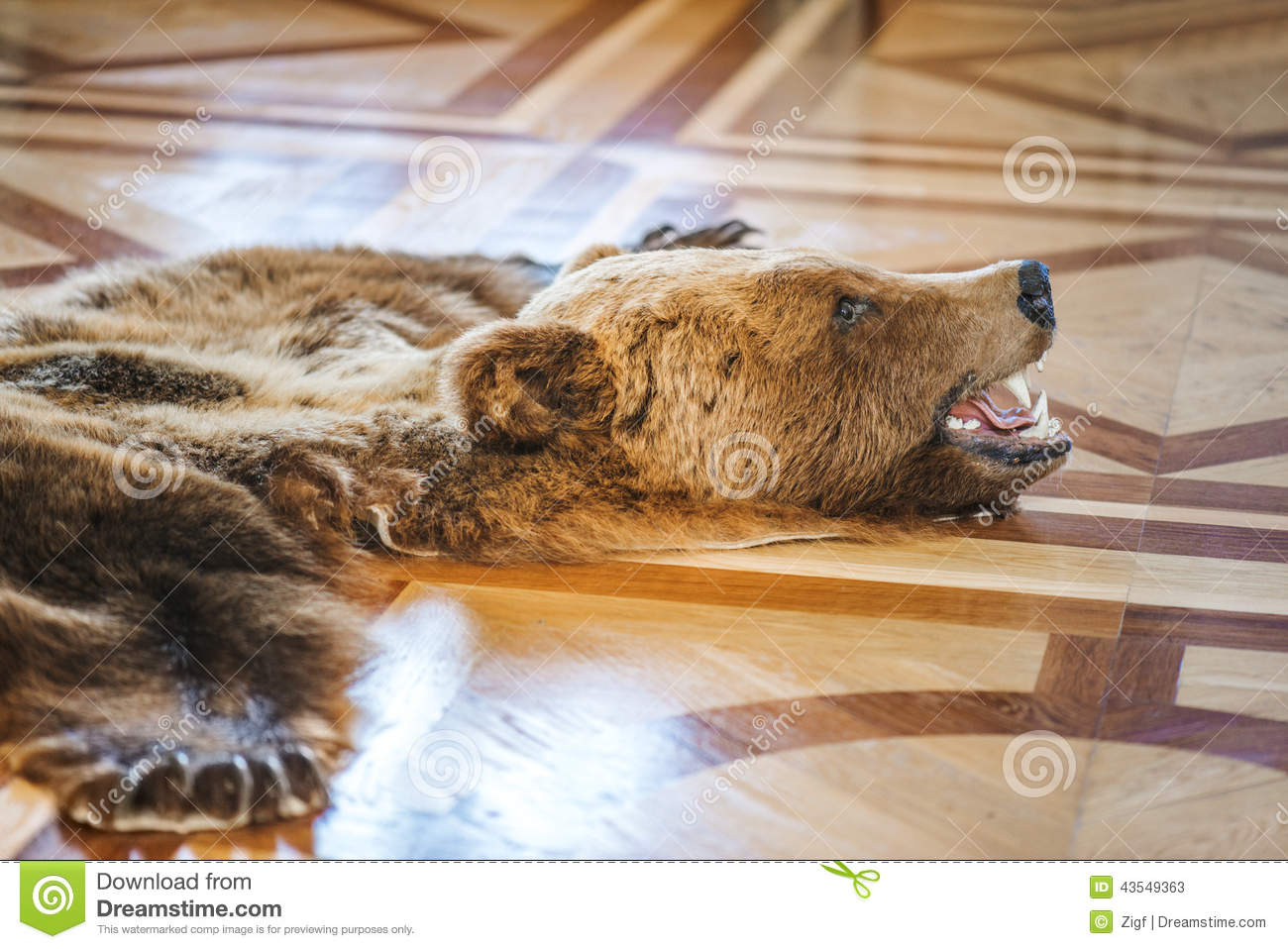 Skin Killed Bear Stock Photo Image 43549363