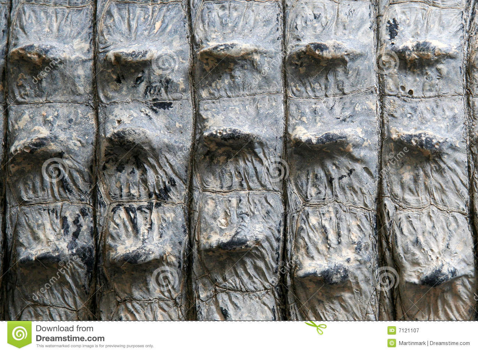 skin texture alligator crocodile royalty free stock photography