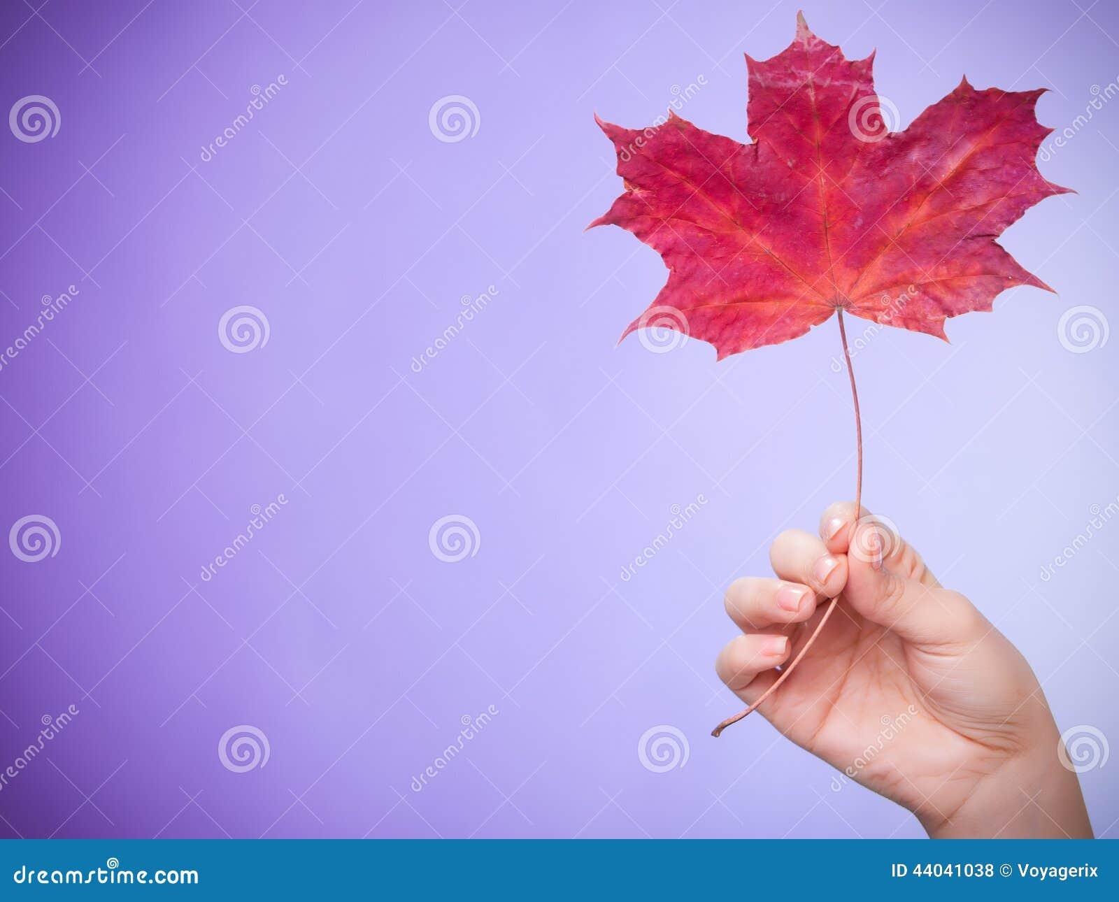 Skincare Mão com a folha de bordo como a pele capilar seca vermelha do símbolo