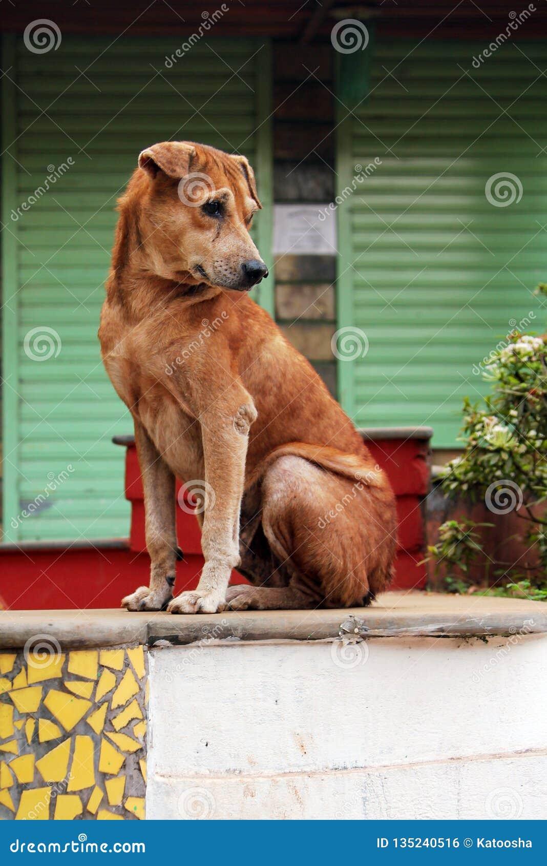 Skinny stray dog sitting on the street