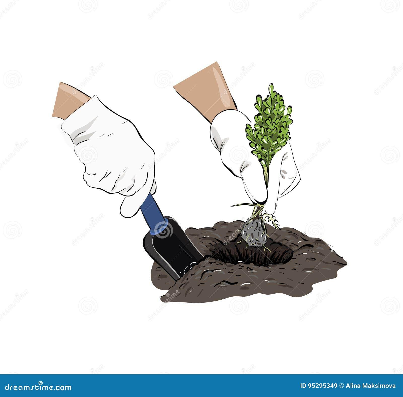 plantera om växter