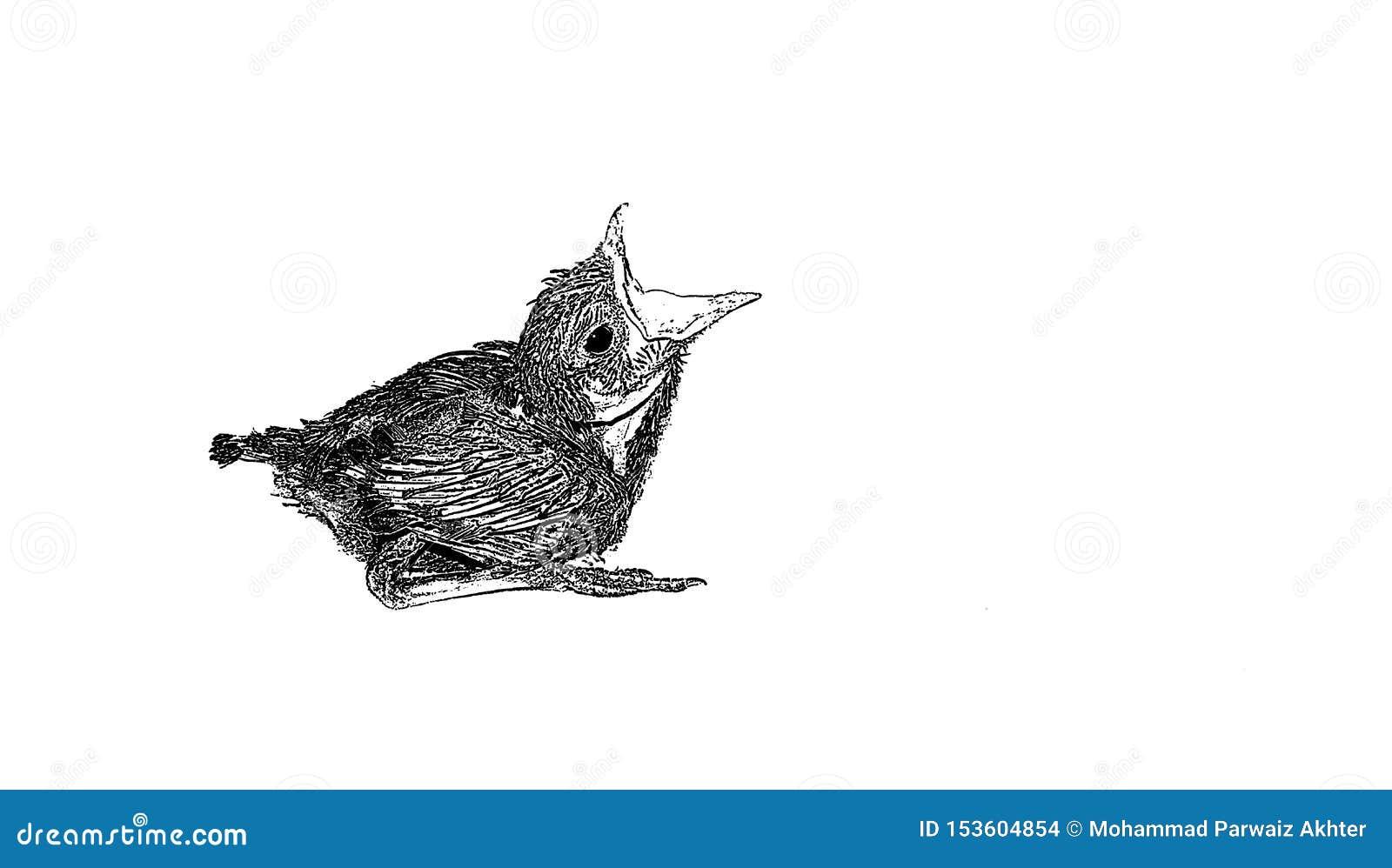 Skissa av behandla som ett barn gnola fågeln som sitter på det vita arket
