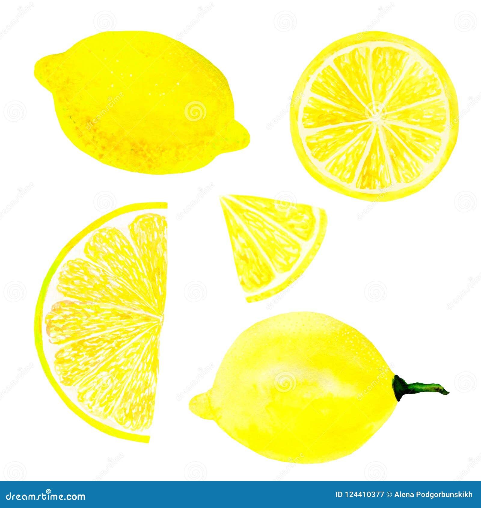 Skiva för frukt och för citron för vattenfärgcitronuppsättning som saftig isoleras på vit bakgrund Hand målad matillustrationdesi