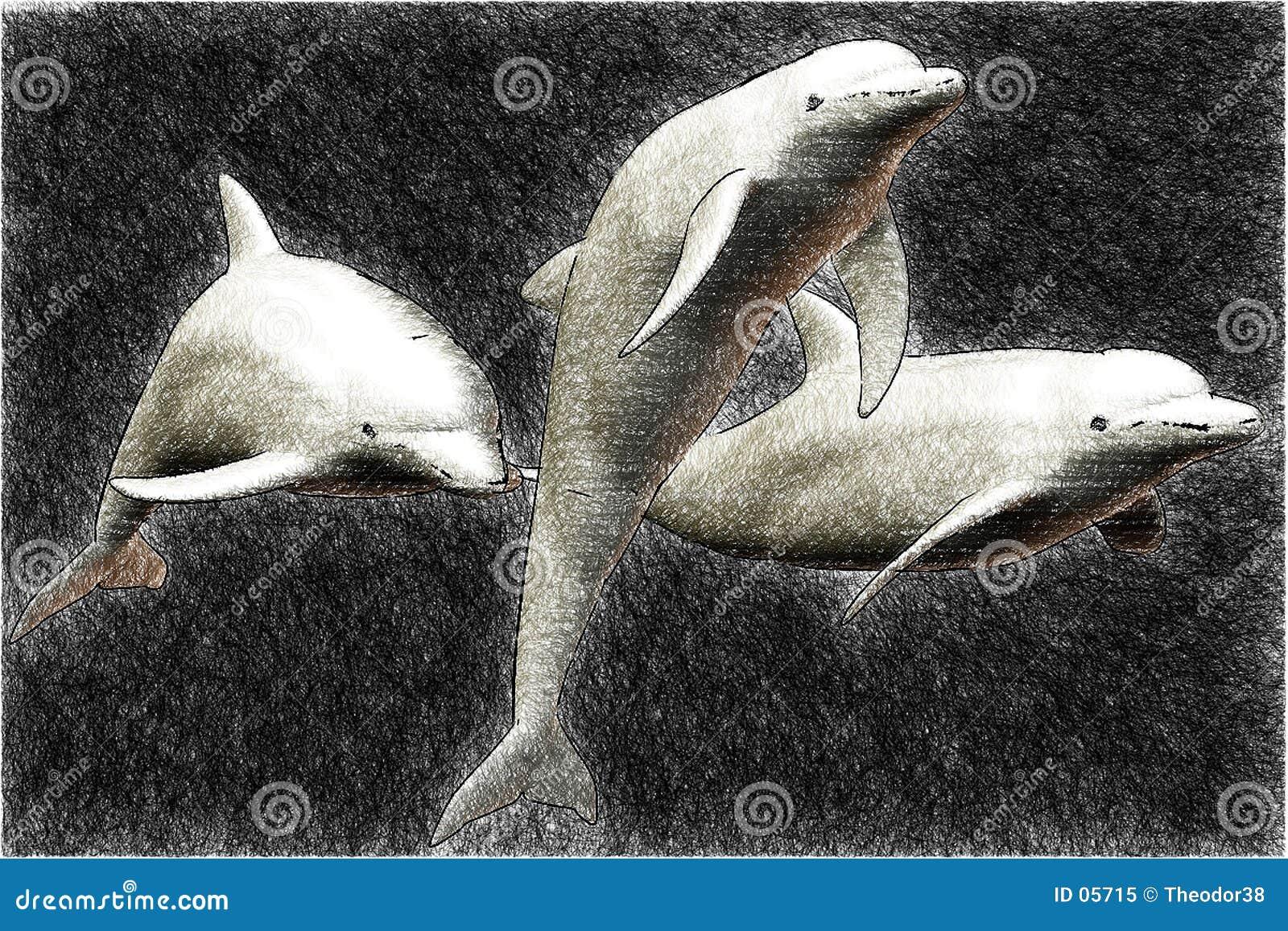 Skizze mit 3 Delphinen