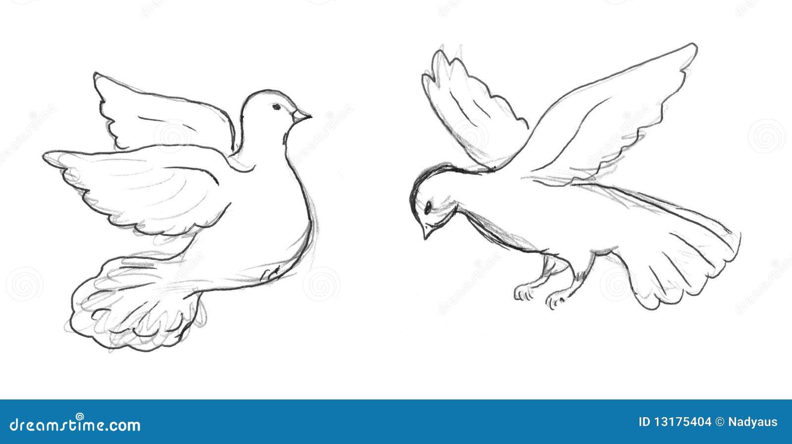 Skizze Mit Zwei Tauben Stockbilder Bild 13175404