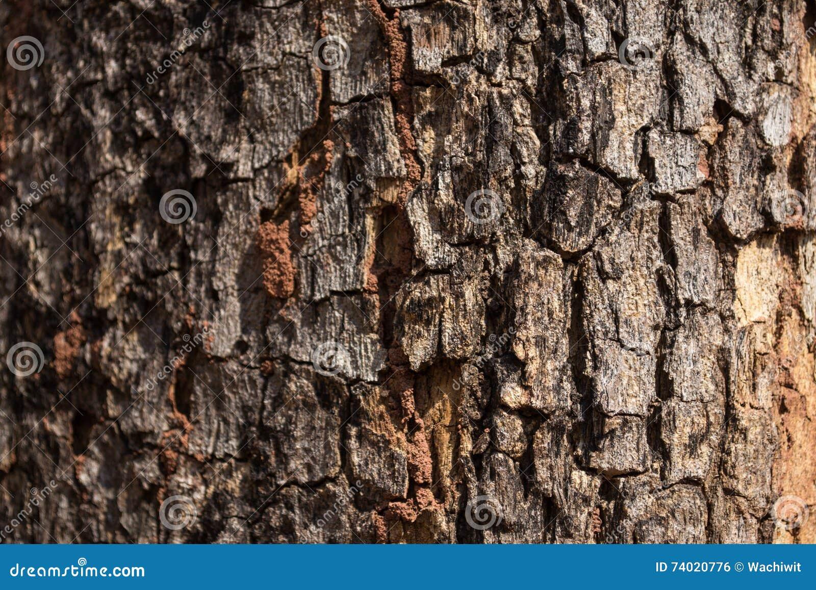 Skjuten tree för skäll close upp