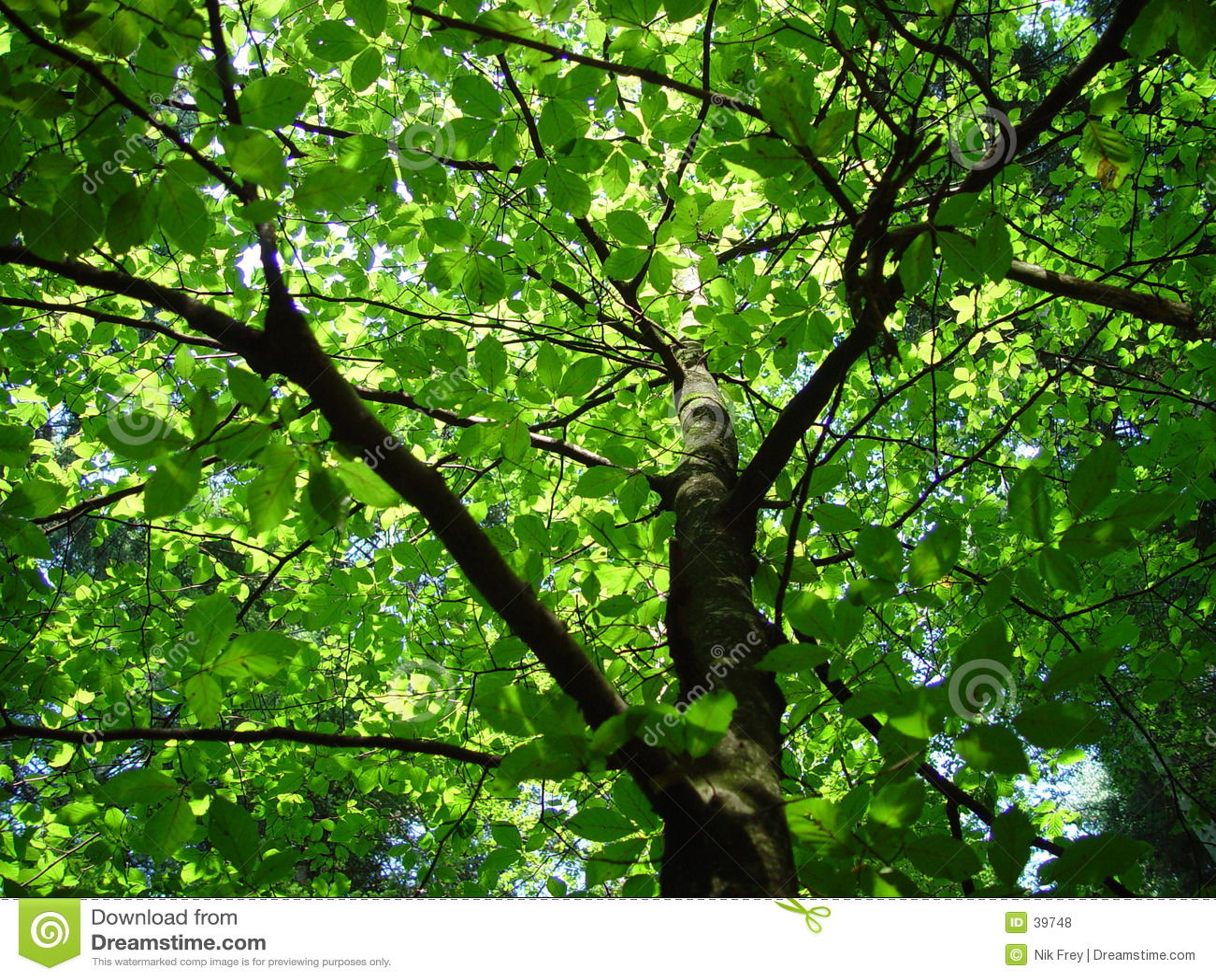 Skog 2 går