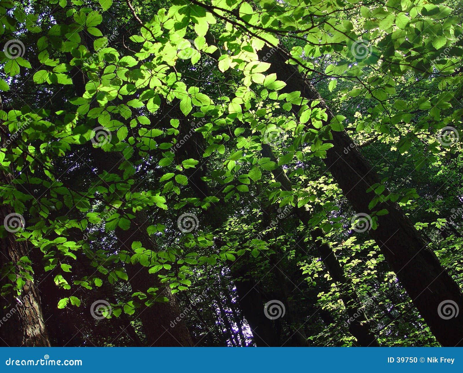 Skog 3 går