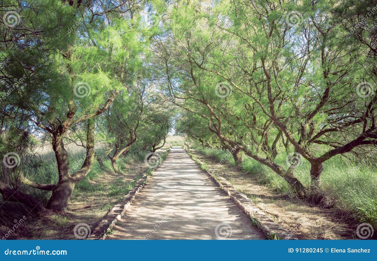 Skog av tarayes