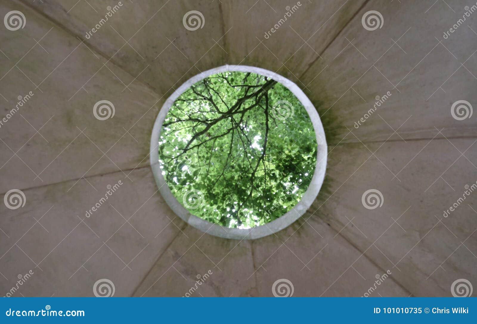 Skog i en öppning