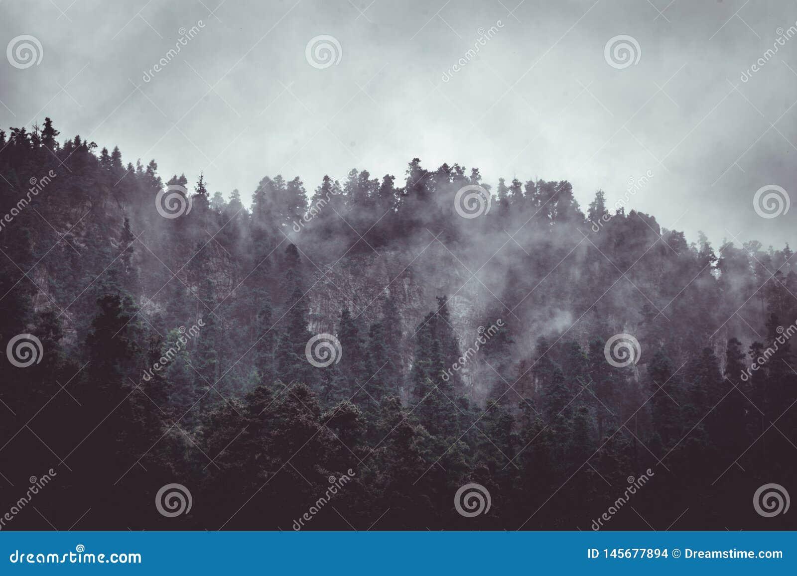 Skog i misten