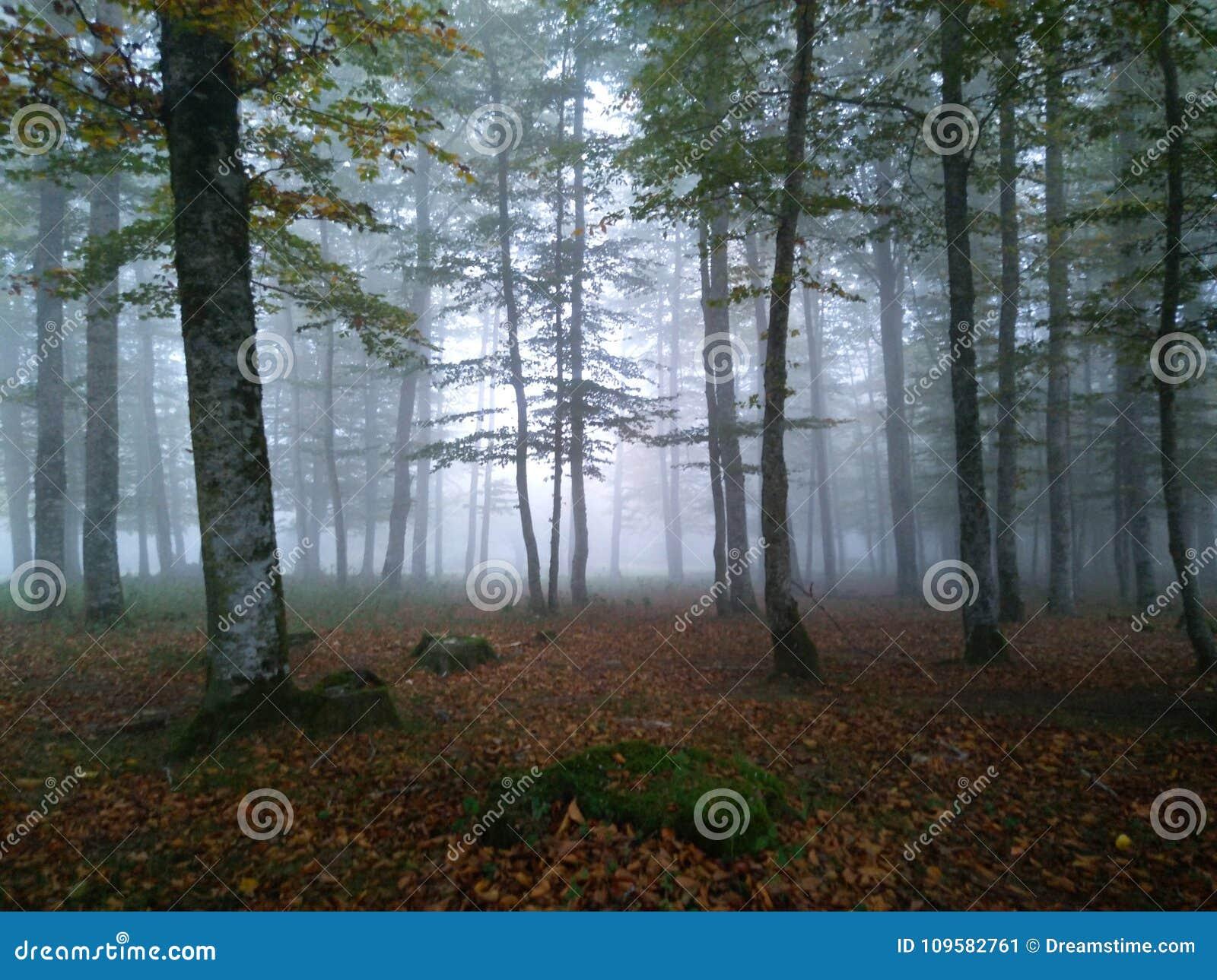 Skog i morgondimman
