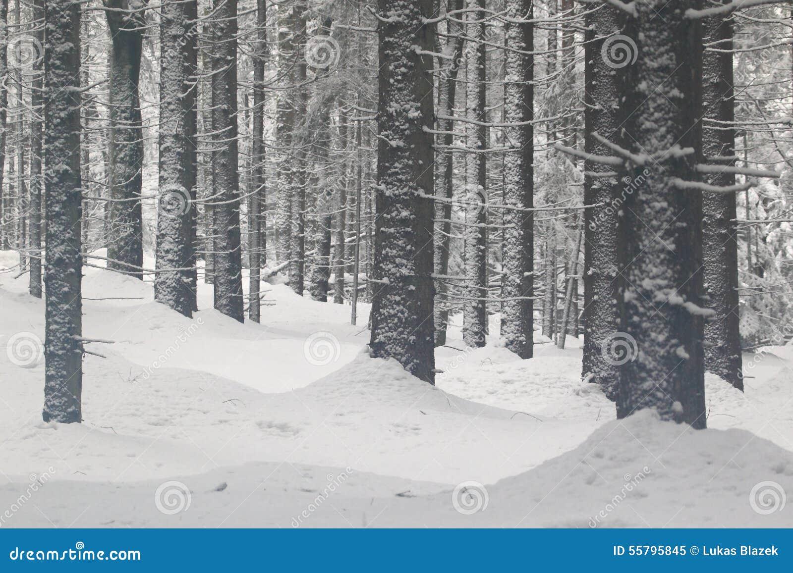 Skog i vinter