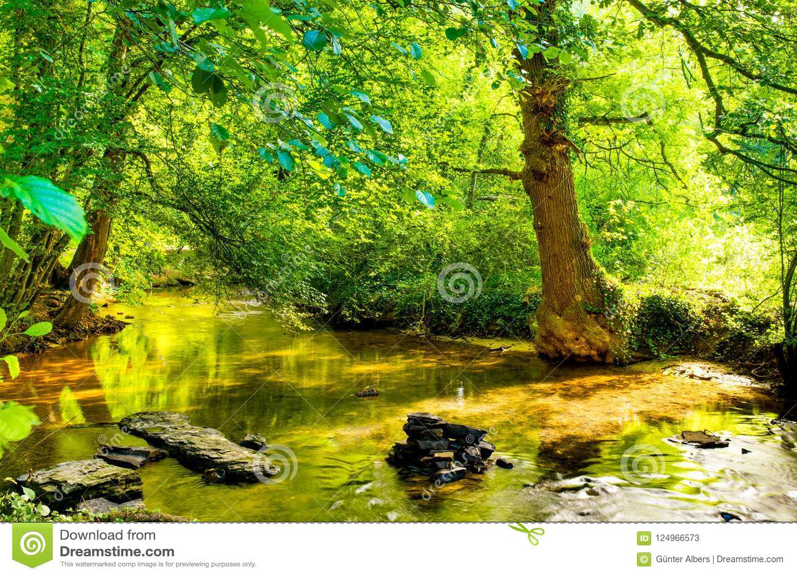 Skog med bäcken