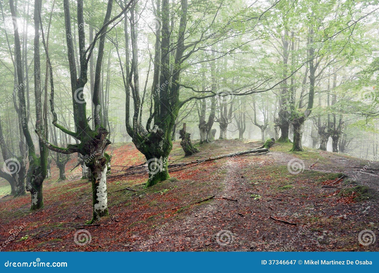 Skog med dimma och slingan
