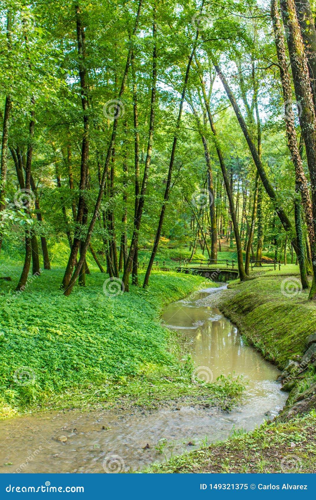 Skog med floden p? solnedg?ngen