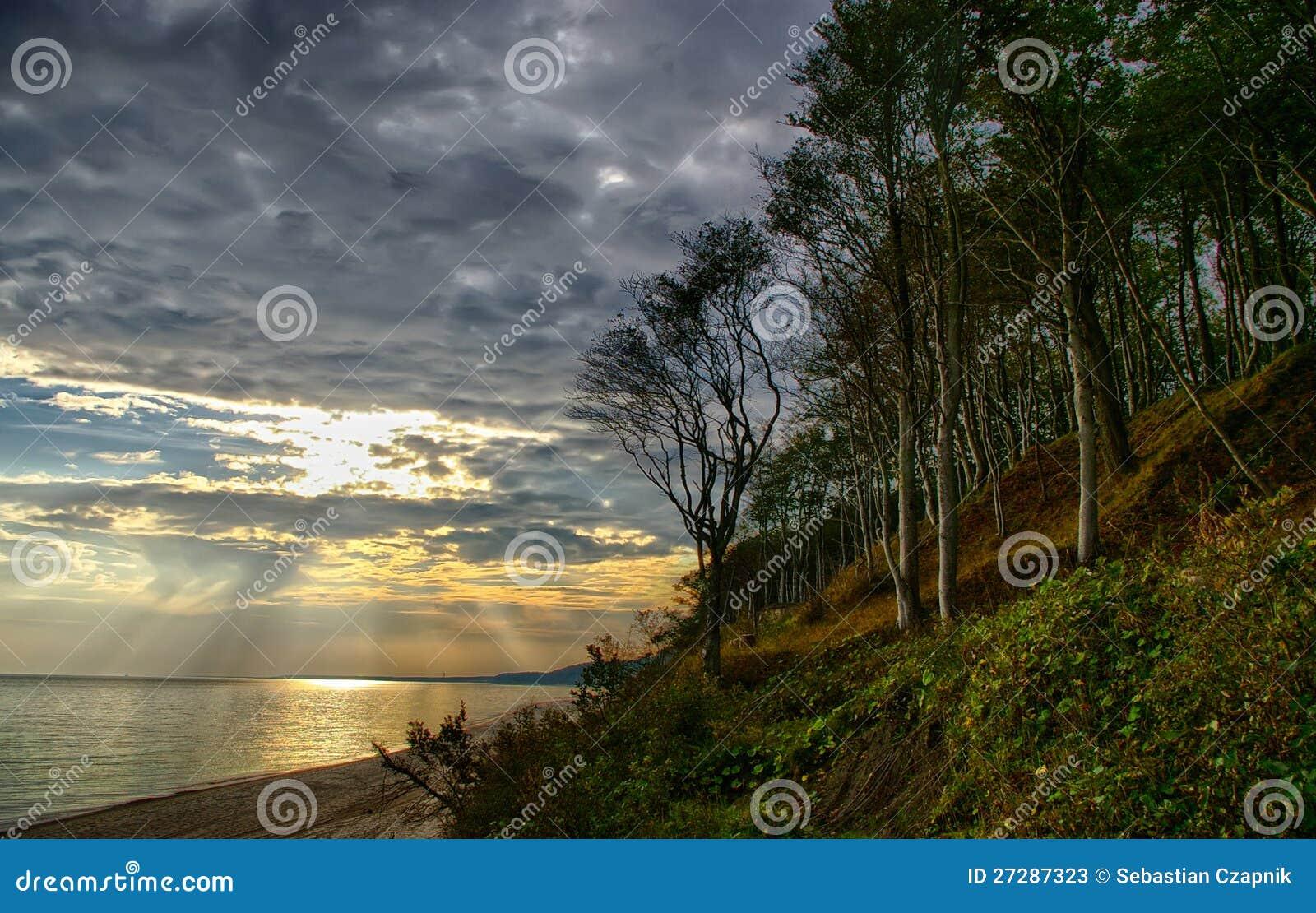 Skog och kust