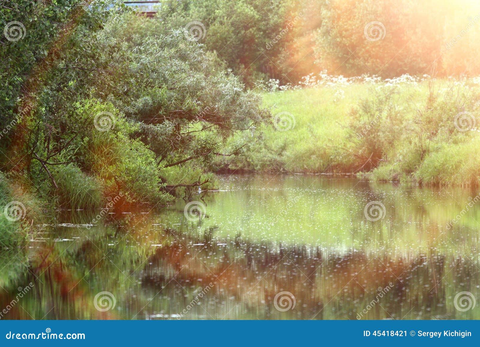 Skog på bankerna av floden