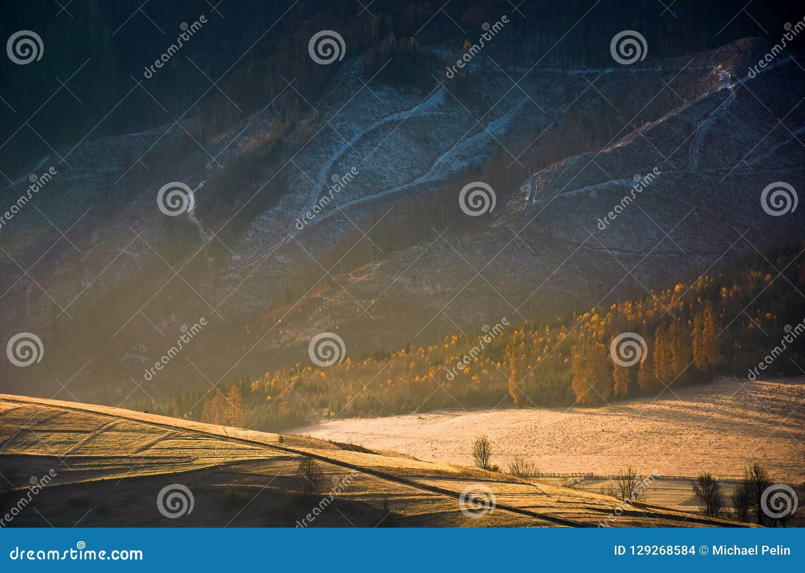 Skog på kullen i guld- ljus och ogenomskinlighet