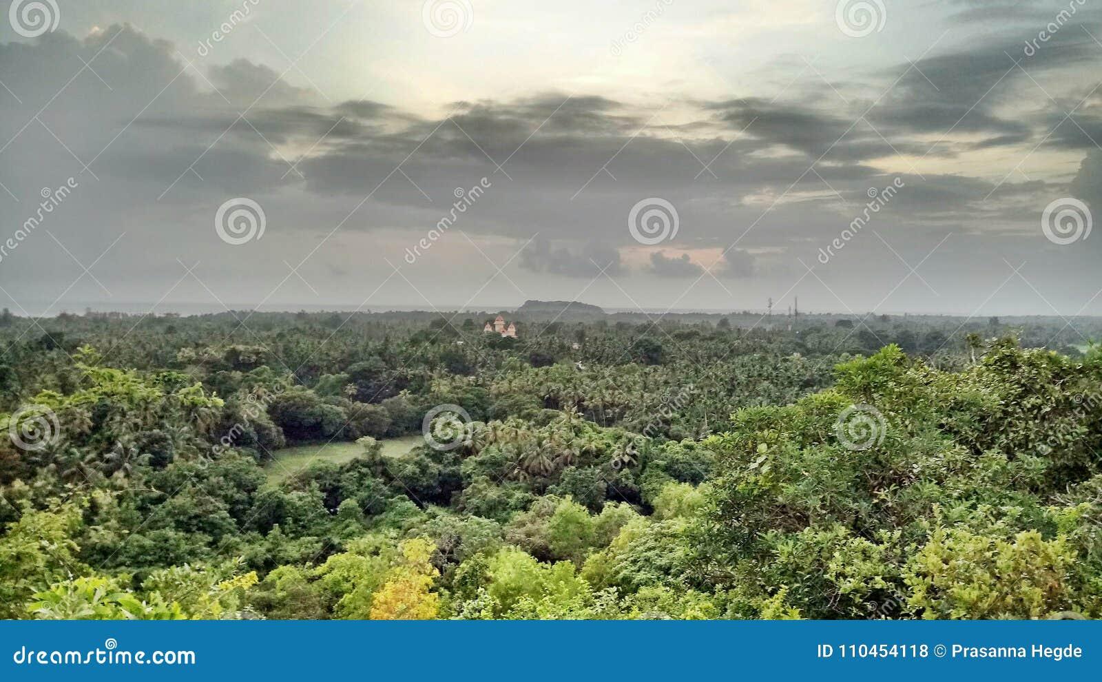 Skogen är precis härlig